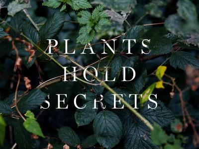 Plants Hold Secrets Mark Spencer Forensic Botanist